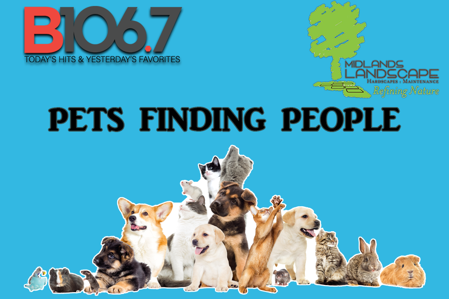 Pets Finding People