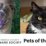 Oktibbeha County Humane Society Pets of the Week