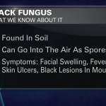 What Is Black Fungus?