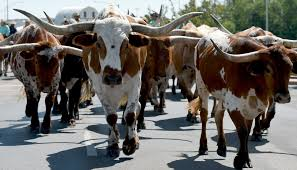 The Cattle Drive @ Five with Tone Marconi