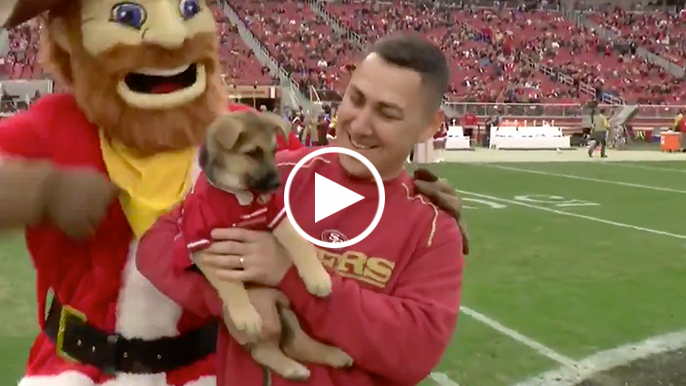 49ers give puppy to police officer who's K9 recently passed away
