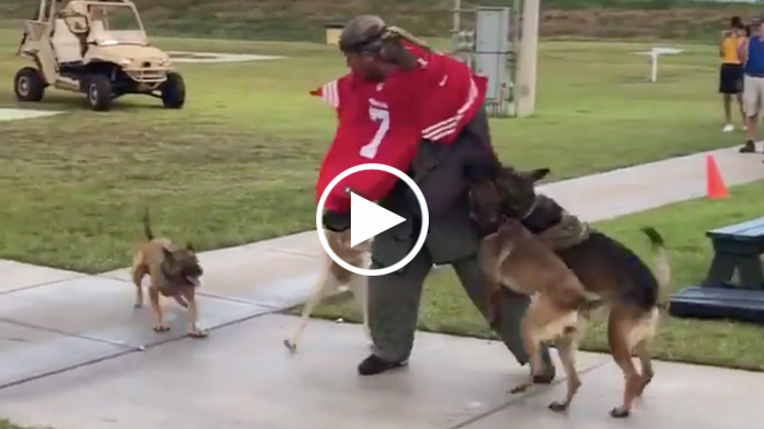 Navy investigating video of dogs attacking Colin Kaepernick stand-in
