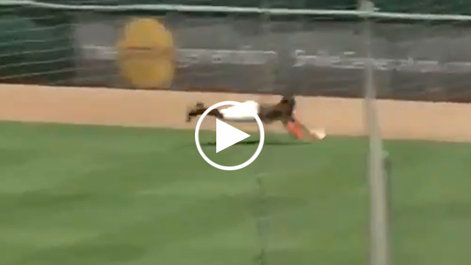 Heliot Ramos lays out to make diving catch vs A's in alternate site scrimmage