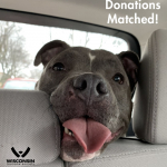Your Donations are DOUBLED in August for the Wisconsin Humane Society!