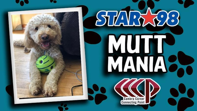 It's Mutt Mania at Star 98 with Camera Corner Connecting Point!