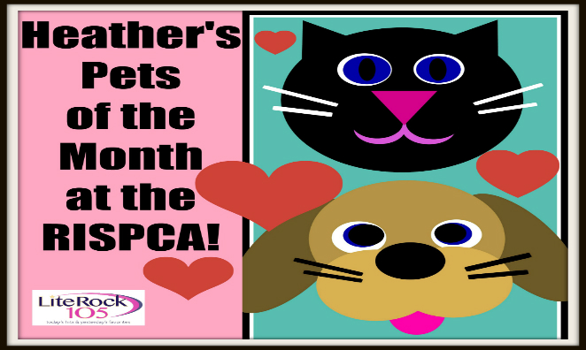 Heather's PETS OF THE MONTH – Lenny & Pickles October 2015