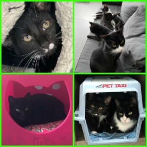 Cats, Cats and more Cats! Meet our FURRY FRIENDS of the WEEK! (10/21/19)