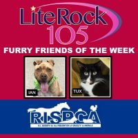 Meet Ian and Tux, our new FURRY FRIENDS of the WEEK! (1/20/20)