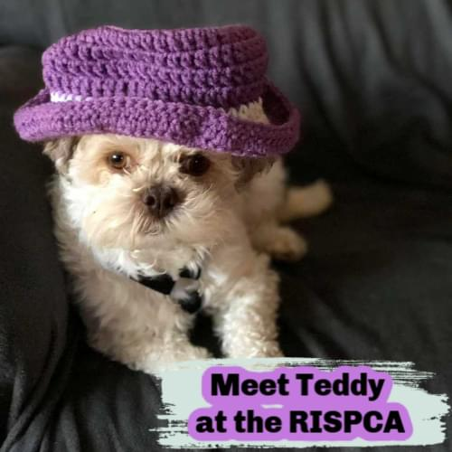 What's new at the RISPCA?