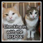 Doodle and Toki RISPCA Best Buddy Program (1)
