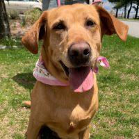 Meet Peaches from the RISPCA!