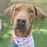 Checking in with the RISPCA! Meet Astrid! Be Mindful of fireworks too!