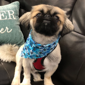 RISPCA update: Meet Ozzie, Paws in the Park & Pet Safety during a storm