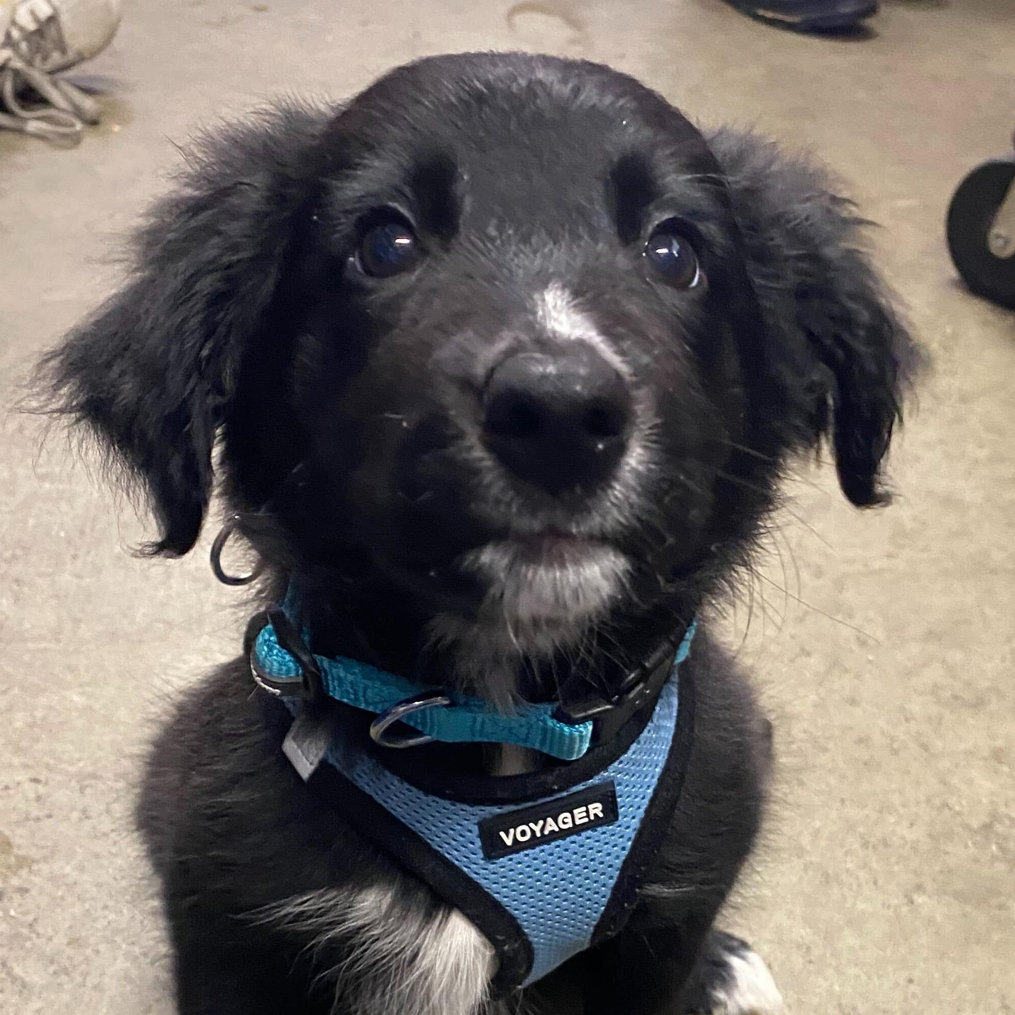 Adopt Olive at the RISPCA!