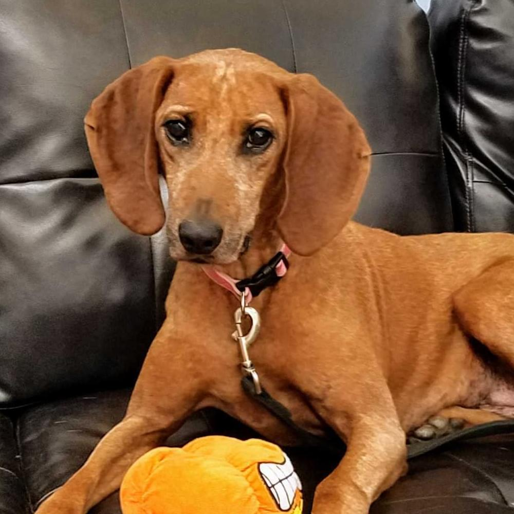 This is Daisy, our FURRY FRIEND of the WEEK for 9/22/20