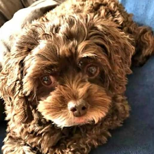 Meet Holly >> our FURRY FRIEND of the WEEK!