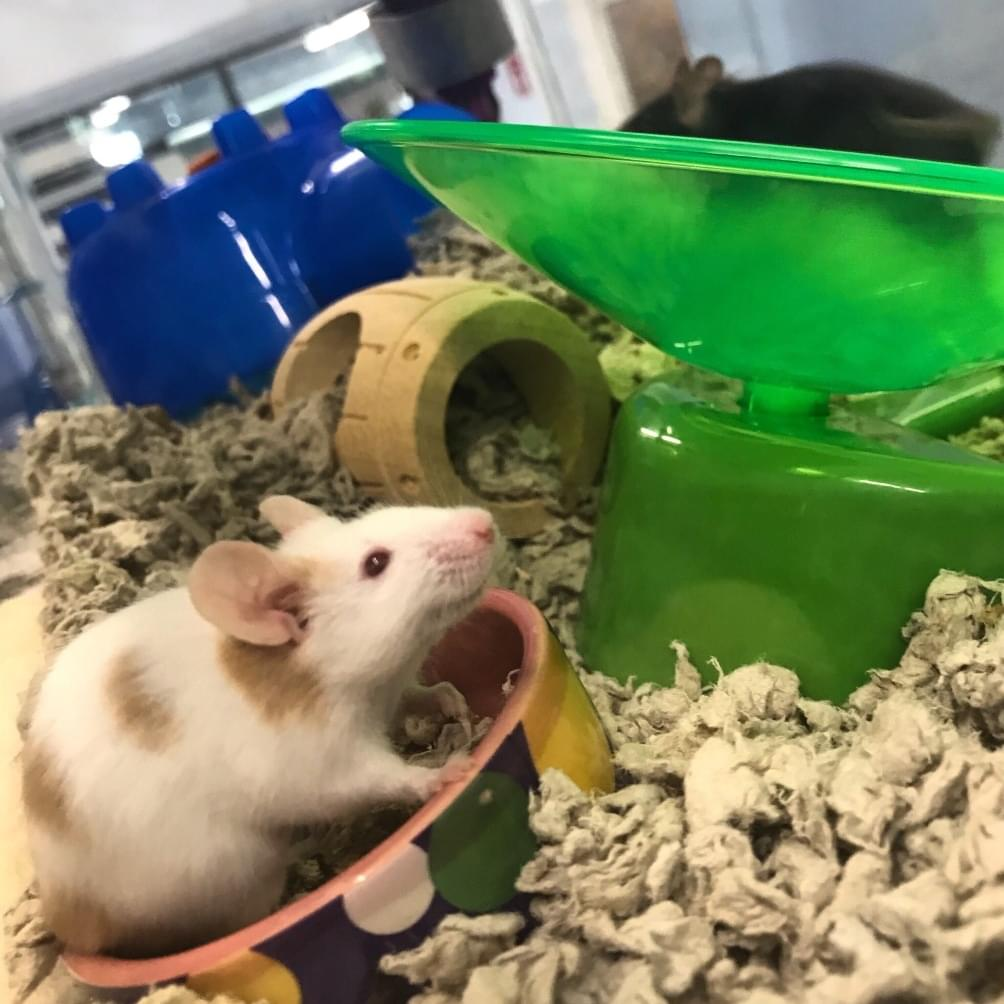 Who wants some fancy mice? Check out our latest FURRY FRIENDS of the WEEK (12/1/20)