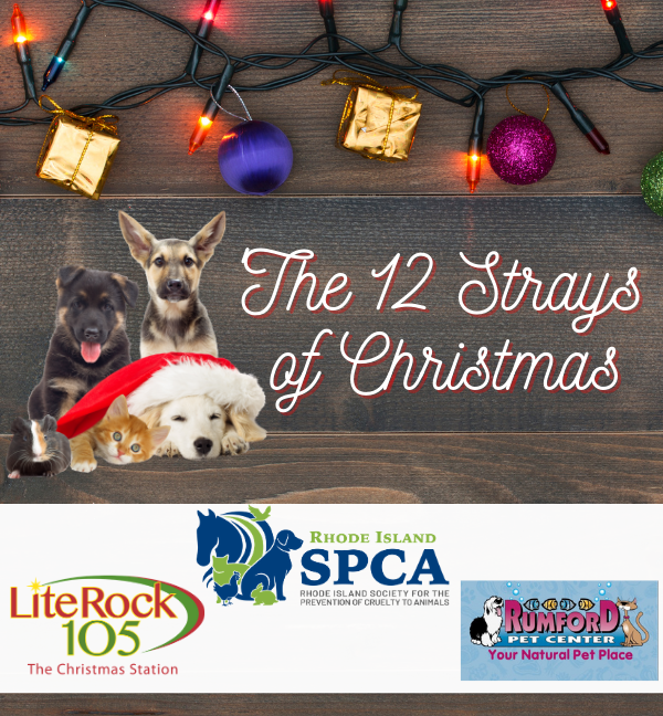 The 12 Strays of Christmas 2020