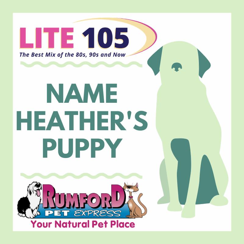 MEET Heather's new puppy… JETT!