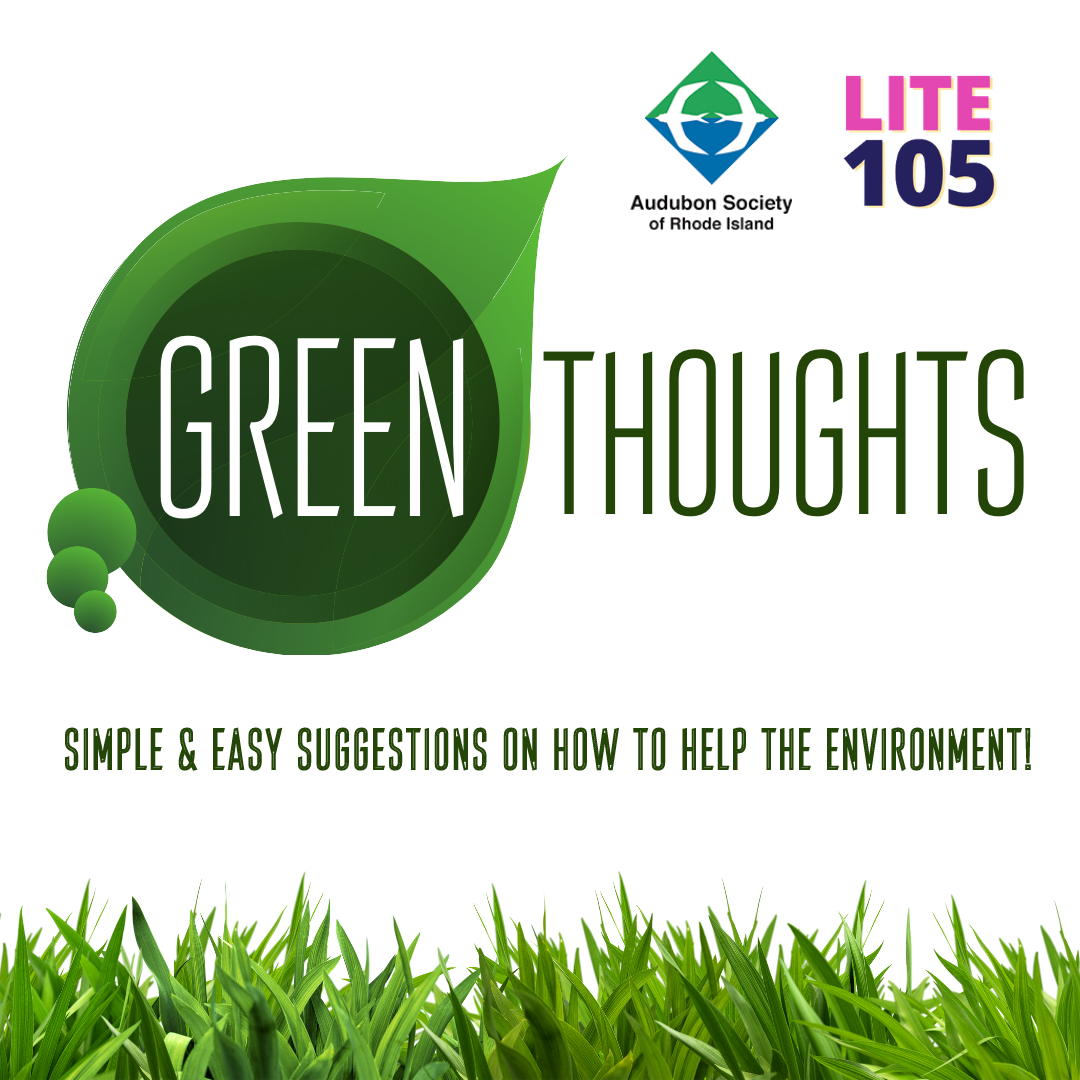 Lite 105's GREEN THOUGHTS