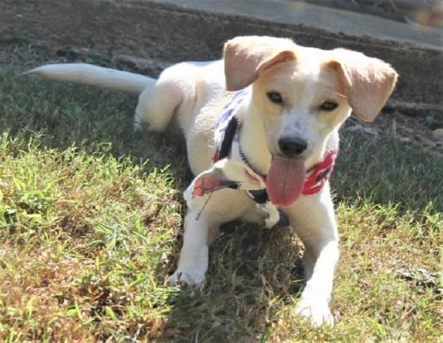 Pet of the Week: Jester the Terrier Mix Dog [PHOTOS]