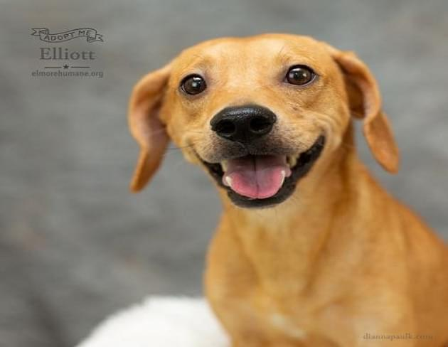 Pet of the Week: Elliot the Beagle/Terrier Mix Dog [PHOTOS]