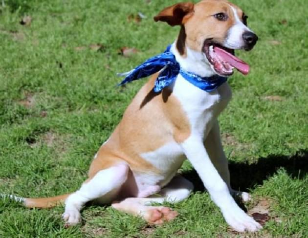 Pet of the Week: Pierce the Hound Mix Dog [PHOTOS]
