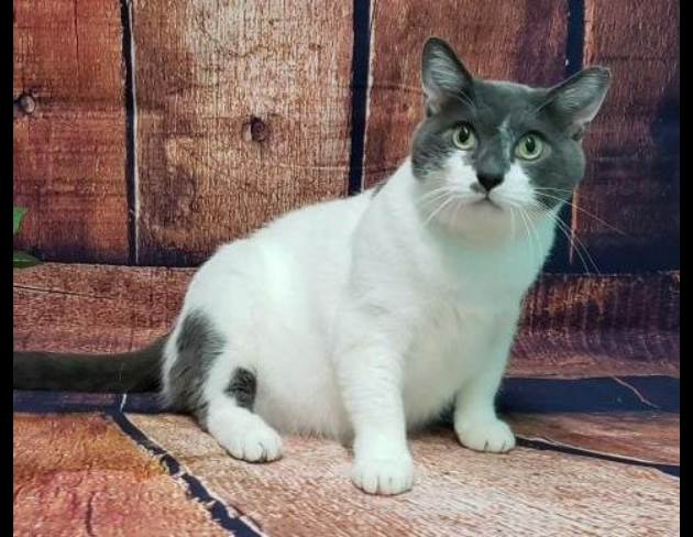 Pet of the Week: Knox the Cat [PHOTOS]