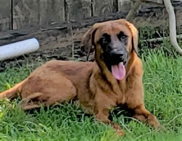 Pet of the Week: Amelia the Shepherd/Hound Mix Dog [PHOTOS]