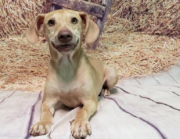 Pet of the Week: Stitch the Dog [PHOTOS]