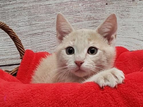 Pet of the Week: Sandy [PHOTOS]
