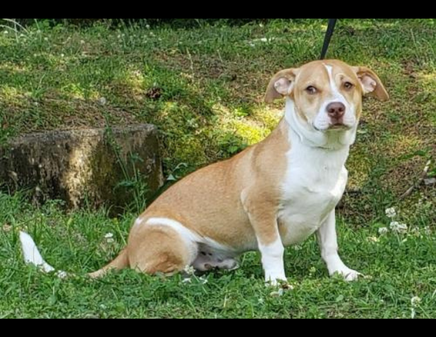 Pet of the Week: Zeus [PHOTOS]