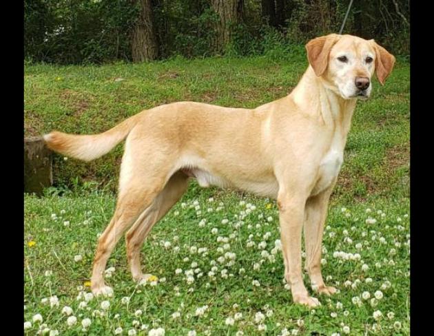 Pet of the Week: Baxter [PHOTOS]