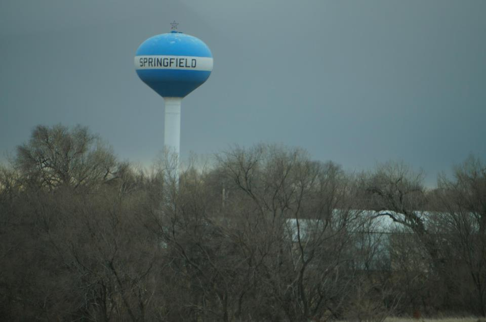 Mountain Lion Spotted In Springfield