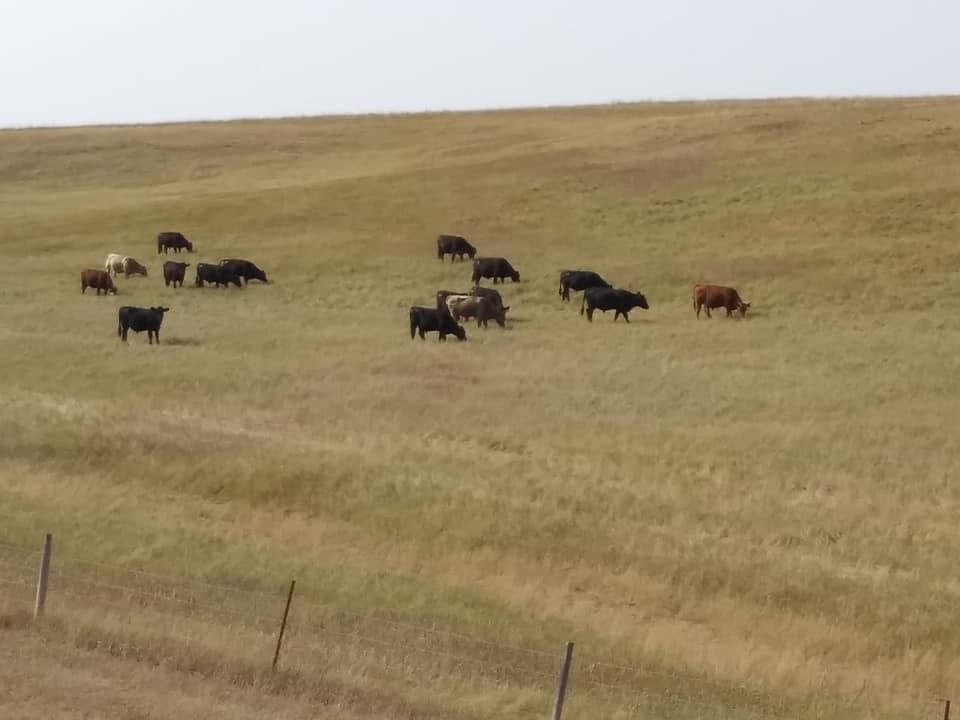 South Dakota Cattleman's Association Looking To Grow Membership Among Other Goals