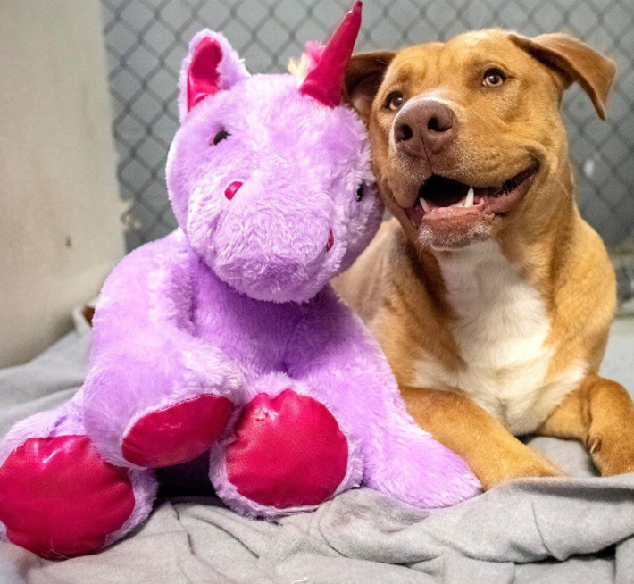 A Dog Who Kept Sneaking into a Dollar General for a Unicorn Toy Gets His Plush and a New Start