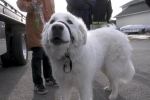 An Ontario dog stops traffic to rescue owner having a seizure
