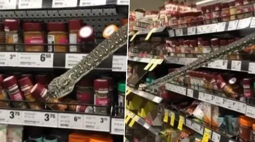 Snakes on a shelf: Massive python surprises shoppers at supermarket
