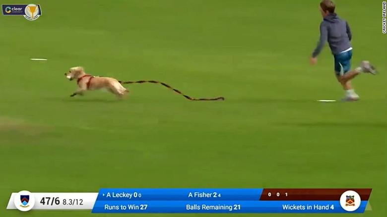 The paw-fect pitch invasion? Dog brings halt to Irish cricket match