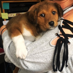 Check out our Pet of the Week: It's Fluffy