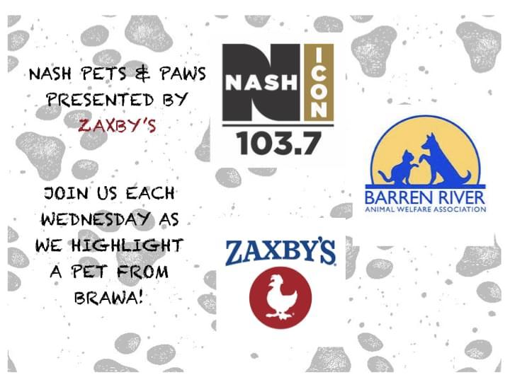 Pets & Paws with BRAWA