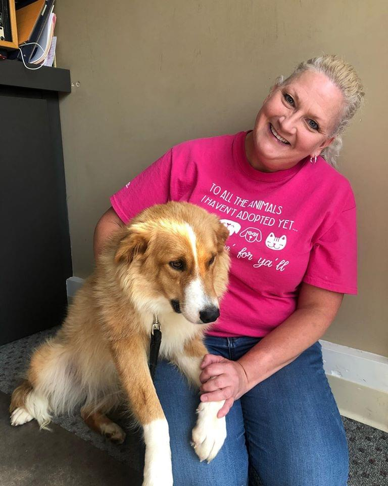 Pets & Paws: Meet Honey this week, a beautiful collie mix