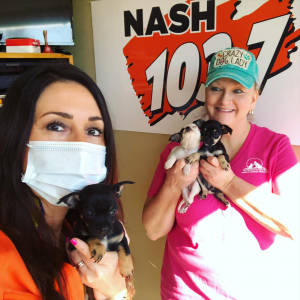 PETS & PAWS: Connie introduces us to 3 Chihuahua puppies