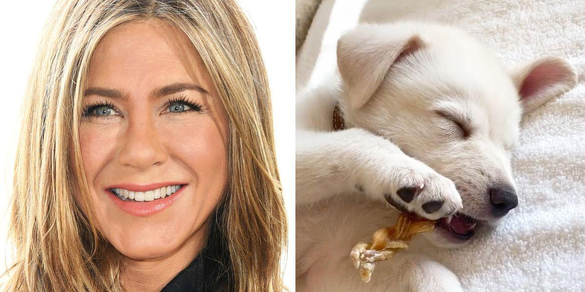 Jennifer Aniston Has a New Puppy