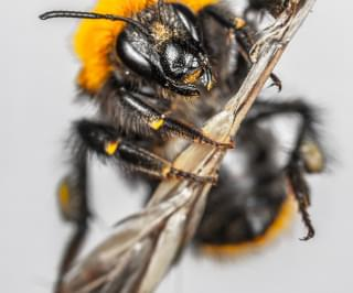 'Murder Hornets' Find Way To The United States
