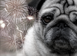 How do you help your dogs with nightly fireworks?