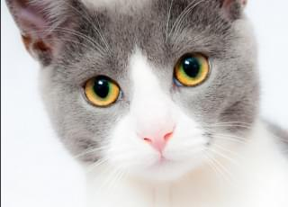 After Some Cats Tested Positive, Social Distancing Applies To Pets