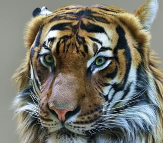 'Tiger King' Documentary, Museum Exhibit On The Way