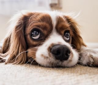 This Is Why Our Dogs Stare at Us