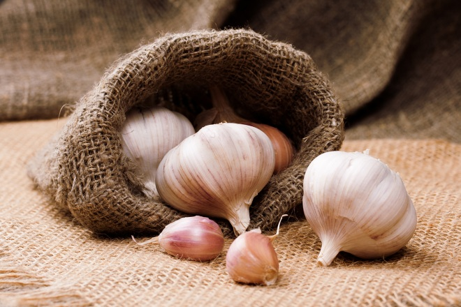 Hudson Valley Garlic Festival